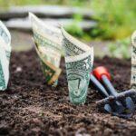 money, grow, interest-1604921.jpg